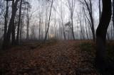 Woodland Trail Sunrise
