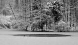Open Water Powel Crosley Lake