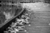 Wooden Walkway Leaves