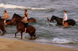 Horses in Lake Malawi