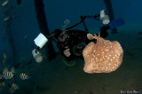 Underwater photographer and a Torpedo Ray
