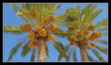 Tunisia066.jpg