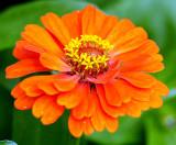 Rainy Season Flower
