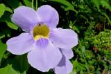 P1110811flower.jpg