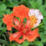 Blossom in Parqueo Benito Juarez