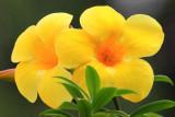IMG_0098flowers.JPG