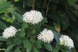 IMG_0189whflowers.JPG