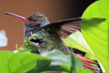 Recovery of a Humming Bird