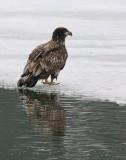 DSC06157 - Eagles of Quidi Vidi III