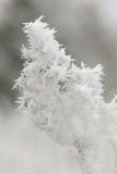 DSC06211 - Weed In Winter