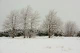 DSC06214 - Frosty Trees