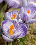 DSC06705 - Spring Has Sprung II