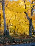 Autumn - Pippy Park 003