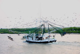 Incoming Shrimp Boat with the Day's Catch