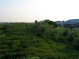 Vegetation Holding Levee Together from Erosion