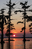 Louisiana Sunset with Cypress Trees