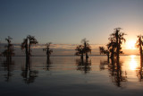 A  Cypress Sunset