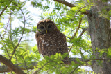Sweet Owl