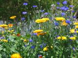 April Showers Bring April Flowers