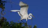 Enormous Oil Spill Endangers our Louisiana Gulf Coast Wildlife and Fish Estuaries