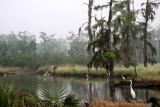 Louisiana - My Home