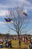 Kite Eating Tree - 5552.jpg