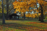 Autumn In November I