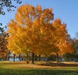 Autumn in November II