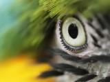 Right-eye female