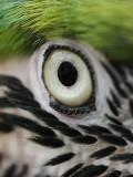 Right-eye male