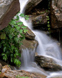 Cranberry Glades - West Virginia