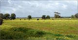 Golden Pastures by Ben D'Acunto