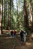 Dad's redwood forest