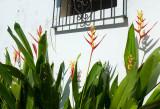 12072006-La Luz Cacao Plantation-Z-016.jpg