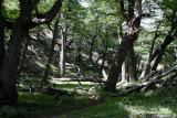 Walk in Los Glaciares national park towards Fitz Roy