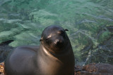 another cute sealion