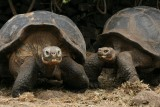 the average life expectancy of giant tortoises is estimated to be 200 years