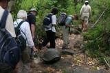 walk among giant tortoises in the wild
