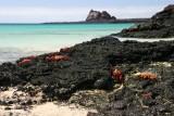 beach full of Sally Lightfoot Crabs
