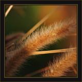 A Grass Vignette At Sunset
