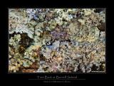 Burrell School Tree bark