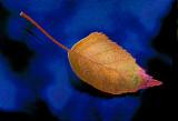 Soft Landing by Paul Wear