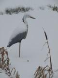 winter pond art - faranya