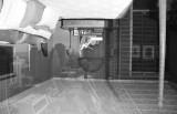 Camera Obscura (Chicago)