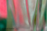 Abstract in Pink and Green