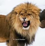 Want to See My Big Teeth?