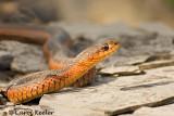 The Smiling Garter Snake