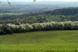 Spring: Austerlitz