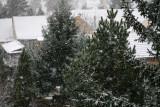 Winter: Austerlitz