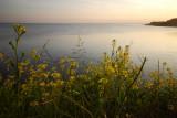 A balmy evening